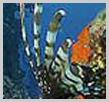 Apo Reef & Coron