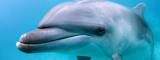 Curious Dolphin, Palau