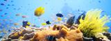 Coral Reef, Visayas